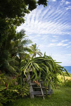 Lush tropical garden on island coast with ocean in background and dragon fruit in bloom.