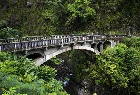 Bridge over creek in lush jungle tropical foliage with green leaves and old stone.