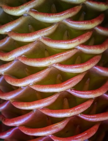 Detail of lush curves in tropical flowering ginger plant in red and yellow colors. Imagens