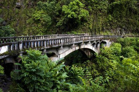 Old bridge in lush jungle green foliage over creek.