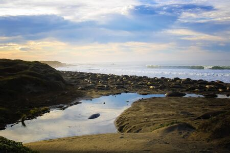 Sunrise over beach covered northern elephant seals with light reflecting in ocean in Central California. Imagens