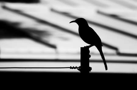 Black and white image bird in silhouette on pole and wire in close up profile. Stock fotó