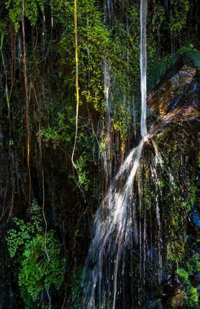 Water pours down vine and fern covered jungle wall in Hawaii