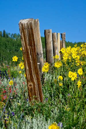 Wildflowers by Fence Stock Photo
