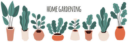 Cute home gardening horizontal banner background, trendy hand drawn plants in pots in simple flat style Archivio Fotografico - 138104764