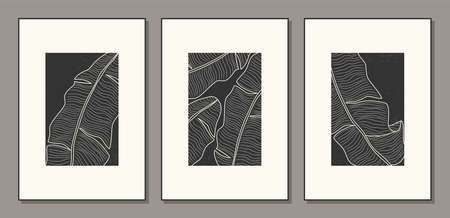 Set of minimalist botanical line art with banana palm leaves, abstract collage 일러스트
