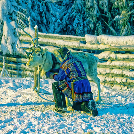 herder: White reindeer with herder in winter lapland in national traditional costume Editorial
