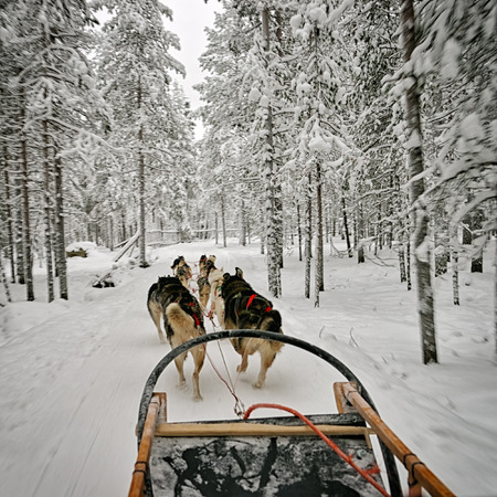 rovaniemi: View from the dog sled Stock Photo