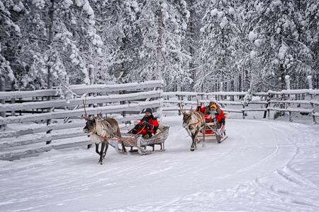 Rovaniemi, Finland - December 30, 2010: Racing on the reindeer sledges in Rovaniemi on December 30, 2010 Reklamní fotografie