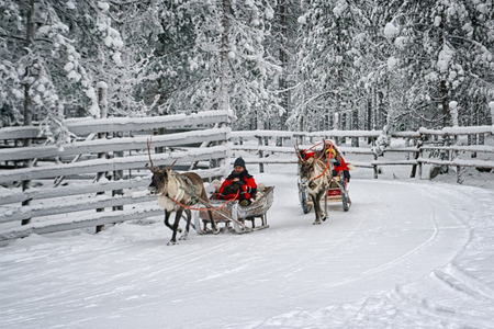 Rovaniemi, Finland - December 30, 2010: Racing on the reindeer sledges in Rovaniemi on December 30, 2010 Zdjęcie Seryjne - 34487998