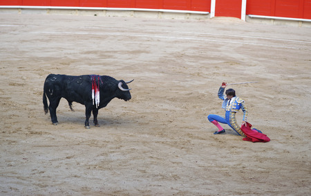 torero: BARCELONA, SPAIN - AUGUST 01, 2010: Spanish torero bullfighter prepares to attack the bull during a bullfighting show in Barcelona, Spain