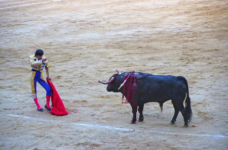 bullfight: BARCELONA, SPAIN - AUGUST 01, 2010: Spanish torero prepared to kill the bull during a bullfight in La Monumental arena on August 01, 2010 in Barcelona, Spain