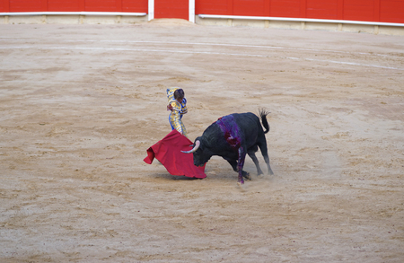 temper: Bullfighter angers the bull with a red cape to show its temper during a bullfighting show in La Monumental arena in Barcelona, Spain