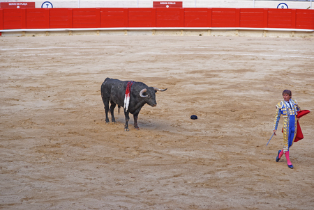 torero: BARCELONA, SPAIN - AUGUST 01, 2010: Bull eyes the bullfighter thoughtfully before an attack during a bullfighting in Barcelona
