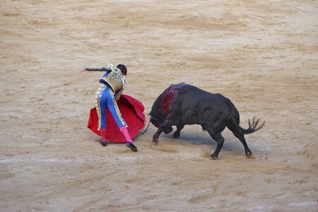 torero: Spanish torero angers a bull during a bullfight in La Monumental arena on August, 2010 in Barcelona, Spain.