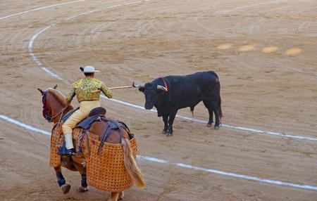 torero: Bull stares at the matador torero during a bullfight in the Plaza Monumental de Barcelona, often known simply as La Monumental in the city of Barcelona, Catalonia, Spain