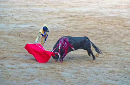 teases: Spanish toreador teases the bull with a cape during the bullfight at the arena of the Plaza de Toros Monumental de Barcelona La Monumental