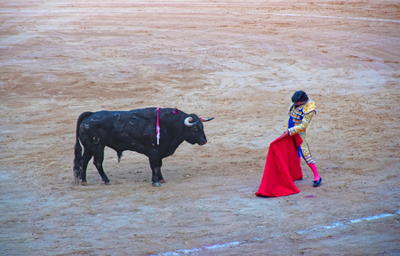 corrida: Traditional Spanish amusement - corrida bullfighting performed at the last bullfighting arena in commercial operation in Catalonia, La Monumental