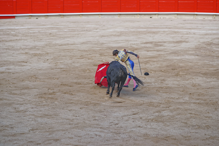 temper: Bullfighter angers the bull to show its temper and character to spectators during a bullfighing in Barcelona, Spain