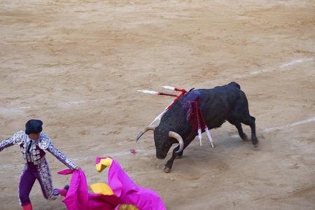 torero: BARCELONA, SPAIN - AUGUST 01, 2010: Retreating torero bullfighter during a bullfight in La Monumental arena on August, 2010 in Barcelona, Catalonia, Spain.