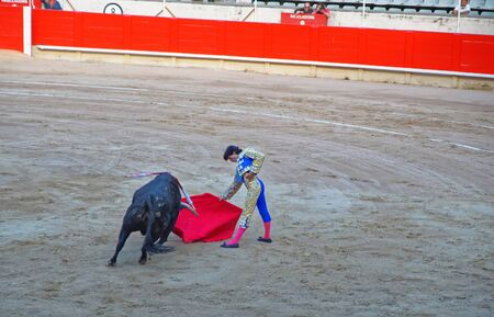 toreador: BARCELONA, SPAIN - AUGUST 01, 2010: Spanish toreador fightsteases the bull with a cape at the bullfighting arena of La Monumental in Barcelona Spain