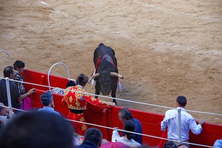 corrida de toros: BARCELONA, ESPAÑA - 01 de agosto de 2010: Las miradas del toro en el torero durante una corrida celebrada en la Plaza Monumental de Barcelona La Monumental. Cataluña. España Editorial