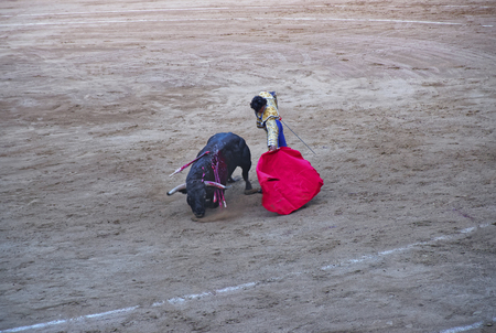 spanish bull: Spanish bull on the knees during the bullfight in La Monumental arena on August, 2010 in Barcelona, Catalonia, Spain. Editorial