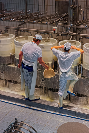 gruyere: GRUYERE, SWITZERLAND - DECEMBER 31, 2014: Cheese makers at work during the processing of the legendary Gruyere cheese at the Maison du Gruyere cheese factory in Switzerland