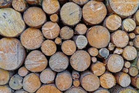 transformed: Pile of raw timber stacked and ready to be transformed into lumber and paper products