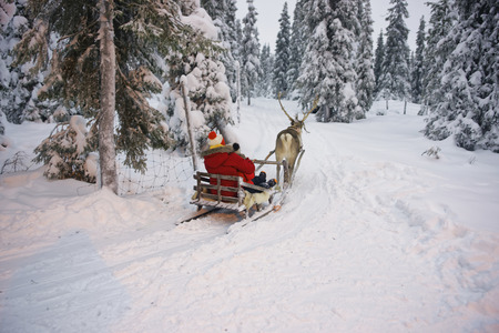 Winter Reindeer sled racing in Ruka in Lapland, in Finland