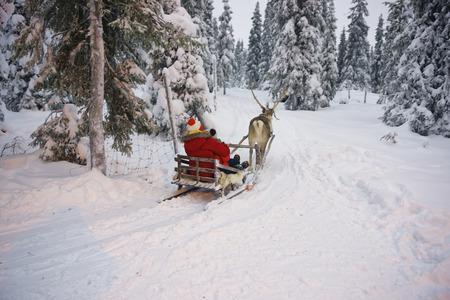 winter finland: Winter Reindeer sled racing in Ruka in Lapland, in Finland