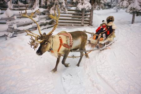 winter finland: Winter Reindeer sledge racing in Ruka in Lapland, in Finland Stock Photo