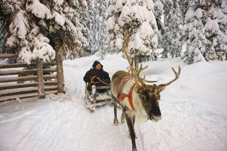 冬のラップランドのトナカイそりフィンランドのルカでのレース 写真素材