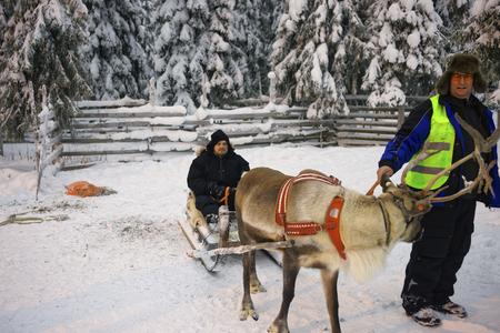 reno: RUKA, FINLAND, DECEMBER 31, 2012: Winter Reindeer sled racing in Ruka of Lapland in Finland