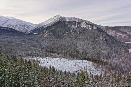 zakopane: Forest on Kasprowy Wierch in Zakopane in Tatra Mounts in winter. Zakopane is a town in Poland in Tatra Mountains. Kasprowy Wierch is a mountain in Zakopane and is the most popular ski areas in Poland