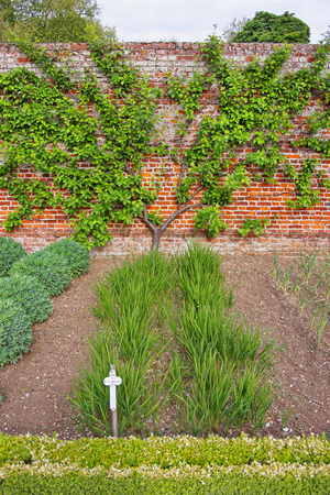 heritage protection: Tree and bushes in Kitchen Garden of Audley End House in Essex in England. It is a medieval county house. Now it is under protection of the English Heritage. Stock Photo