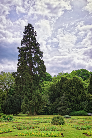 heritage protection: Big old fir trees and flowers in Park of Audley End House in Essex in England. It is a medieval county house. Now it is under protection of the English Heritage. Stock Photo