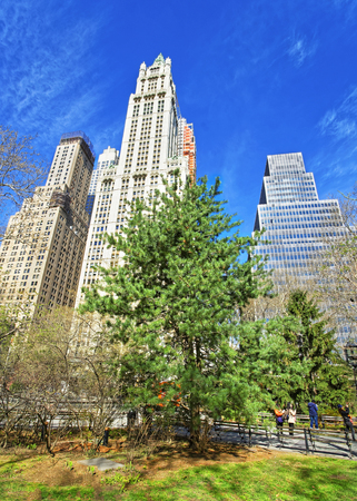 large tree: City Hall Park with tourists in Lower Manhattan, New York, USA. Skyscrapers on the background.