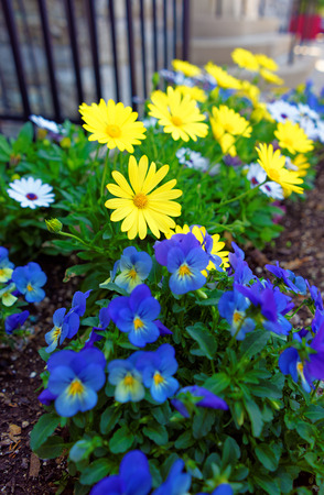 flowered: Color Flowered bed in Philadelphia City Center, Pennsylvania, USA.