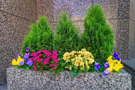 flowered: Flowered bed in Philadelphia City Center, Pennsylvania, USA.