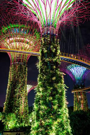 singaporean: Singapore, Singapore - March 2, 2016: Supertrees grove of the Gardens by the Bay of Singapore center. It is a music and light show when trees are illuminated by different colors