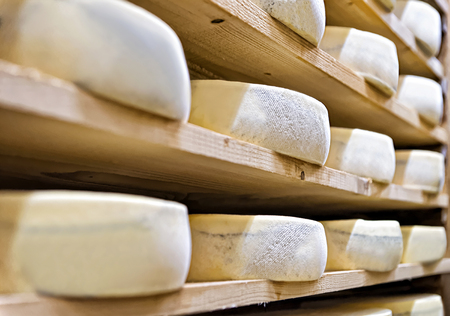 creamery: Aging Cheese on wooden shelves at maturing cellar in Franche Comte creamery in France