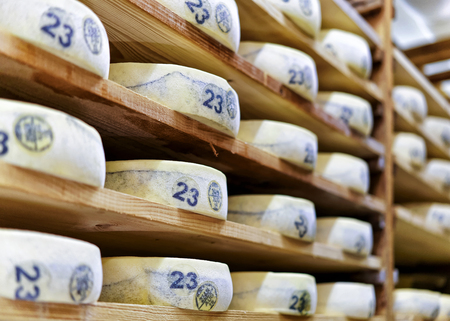 storehouse: Aging Gruyere de Comte Cheese on wooden shelves at maturing cellar in Franche Comte creamery in France
