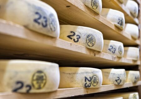 creamery: Aging Cheese on wooden shelves in maturing cellar in Franche Comte creamery in France