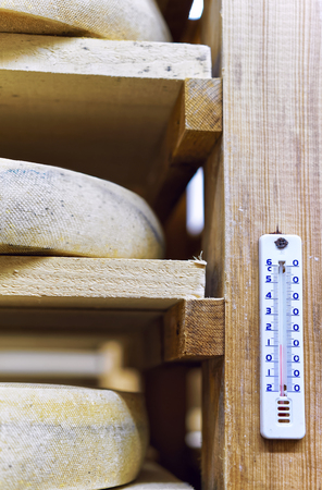 creamery: Aging Cheese on wooden shelves at the ripening cellar in Franche Comte creamery in France