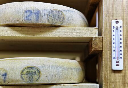 creamery: Aging Cheese on wooden shelves on the maturing cellar in Franche Comte creamery in France