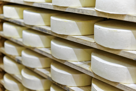 creamery: Comte Young Cheese on wooden shelves on maturing cellar in Franche Comte creamery in France Stock Photo