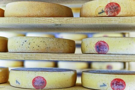 creamery: Comte Aging Cheese on wooden shelves on ripening cellar in Franche Comte creamery in France