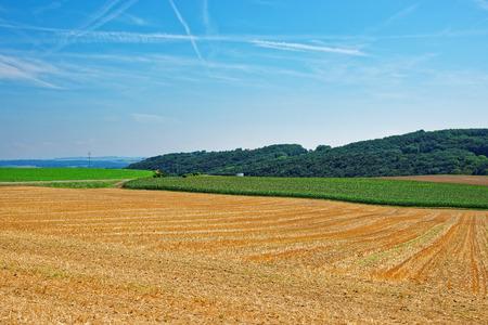 Field at a Swiss village, Yverdon les Bains in Jura Nord Vaudois district of Canton Vaud, Switzerland. Stock Photo