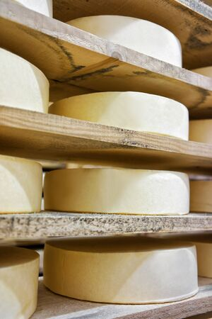 creamery: Row of aging Cheese on wooden shelves in maturing cellar of Franche Comte creamery in France Stock Photo